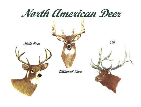 Wall Art - Painting - North American Deer Number 2 by Michael Vigliotti