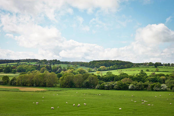 English Countryside Photograph - Northumberland by Tom Gowanlock