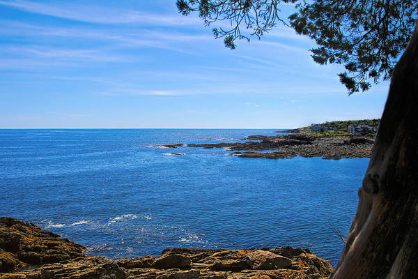 Photograph - Oarweed Cove by Jemmy Archer