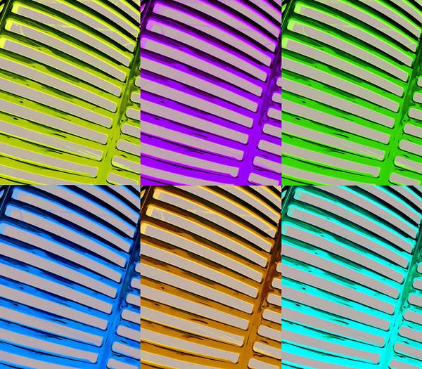 Wall Art - Photograph - Observe Full Color by Jamie Lynn