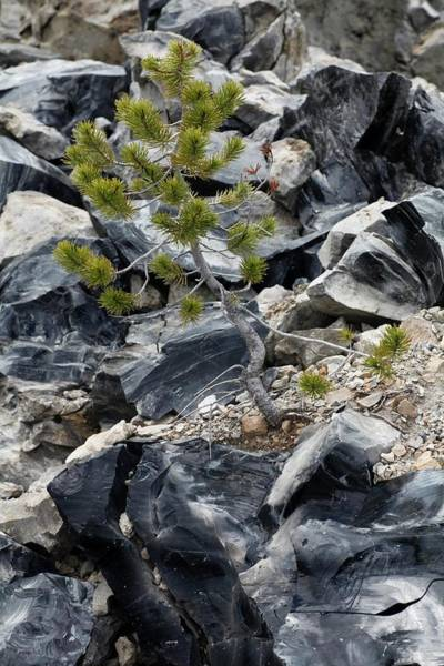 Rock Face Photograph - Obsidian Flow by Michael Szoenyi/science Photo Library