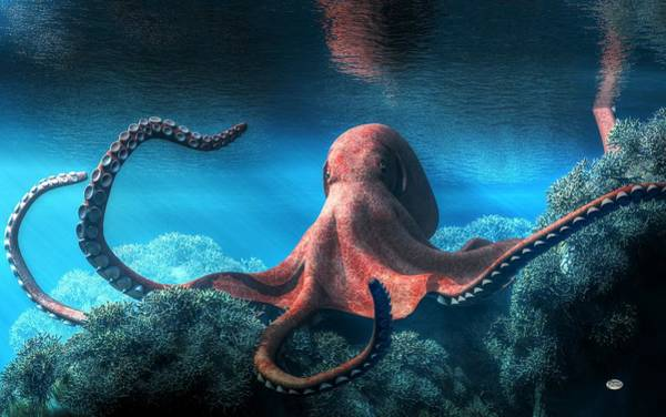 Digital Art - Octopus by Daniel Eskridge