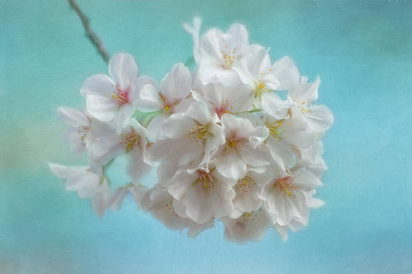 Photograph - Ode To Spring by Kim Hojnacki