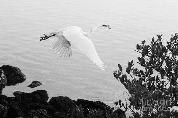 Photograph - Off To The Nest by Deborah Benoit