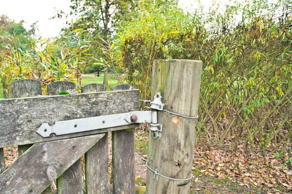 Boundaries Wall Art - Photograph - Old Gate by Tom Gowanlock