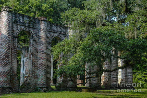 Photograph - Old Sheldon Church Ruins South Carolina by Dale Powell