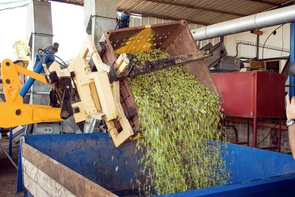 Olive Oil Photograph - Olive Oil Press by Photostock-israel