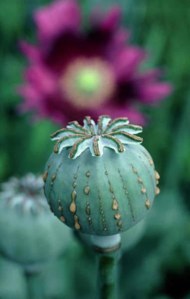 Opium Art Opium Art | Fin...