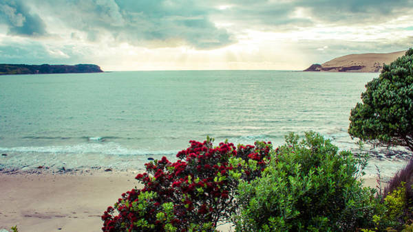 Pohutukawa Photograph - Opononi Beach New Zealand by Igor Fracellio