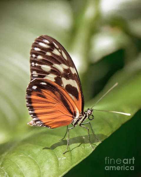Wall Art - Photograph - Orange Butterfly by Lucid Mood