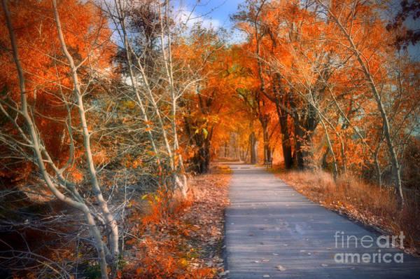 Photograph - Orange Glory by Tara Turner