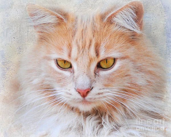 Long Hair Cat Photograph - Orange Tabby Cat by Jai Johnson