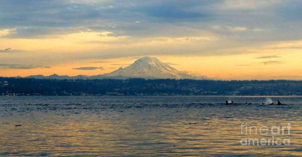 Blackfish Wall Art - Photograph - Orca Family And Mt. Rainier by Gayle Swigart