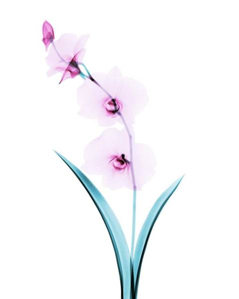 Wall Art - Photograph - Orchid Flowers by Brendan Fitzpatrick