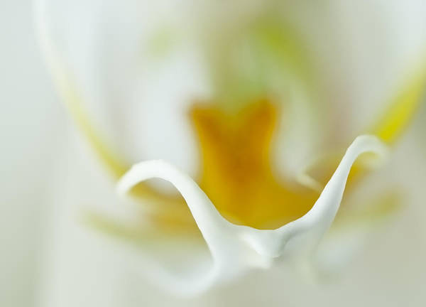 Photograph - Moth Orchid Macro by Ginger Wakem