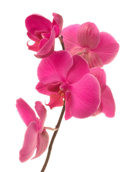 Environmental Conservation Photograph - Orchid by Vidok