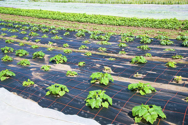 Row Crops Photograph - Organic Farming by Antonia Reeve/science Photo Library