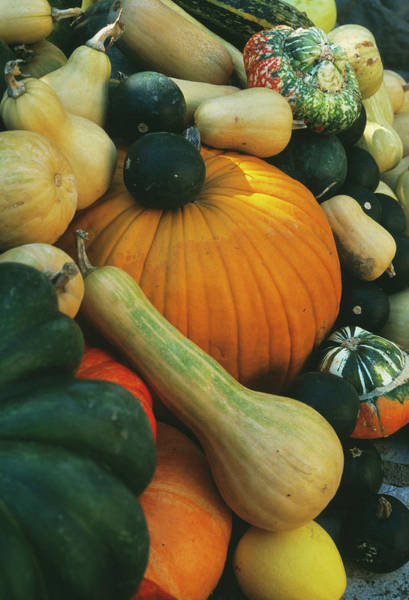 Acorn Squash Photograph - Organic Vegetables by Antonia Reeve/science Photo Library