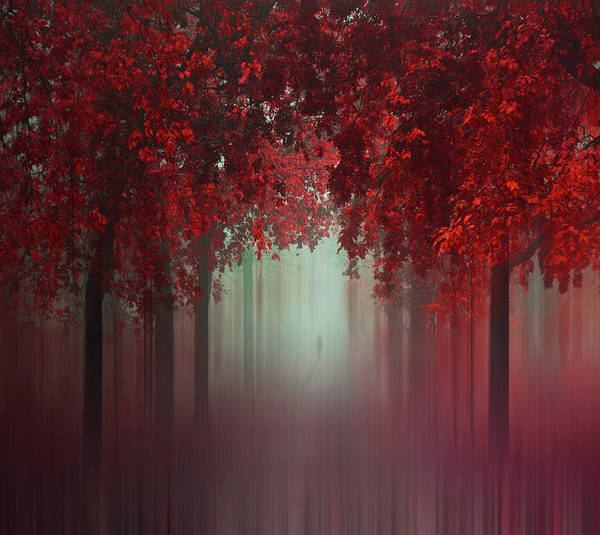 Wall Art - Photograph - Out Of Love by Ildiko Neer