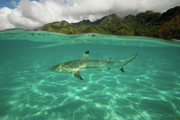 Island In The Sky Photograph - Over Under, Half Water Half Land, Shark by Panoramic Images