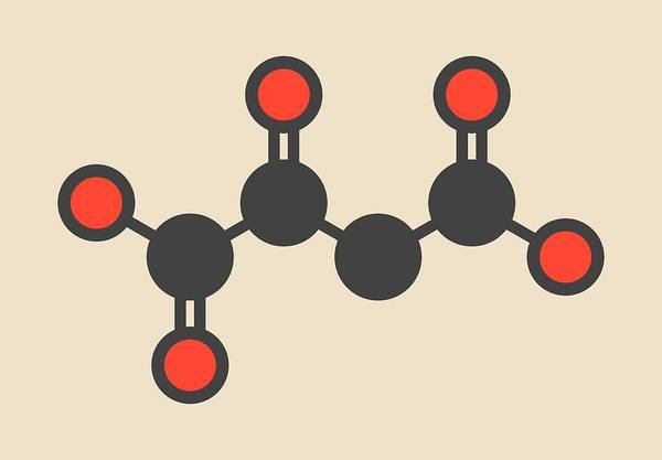Wall Art - Photograph - Oxaloacetic Acid Molecule by Molekuul/science Photo Library