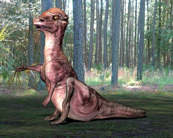 Palaeozoology Wall Art - Photograph - Pachysaurus Dinosaur by Friedrich Saurer