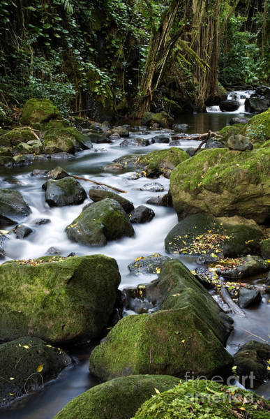 Photograph - Pali Forest by Charmian Vistaunet
