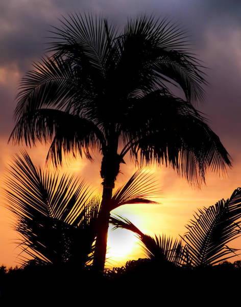 Wast Wall Art - Photograph - Palm Shadows by Karen Wiles