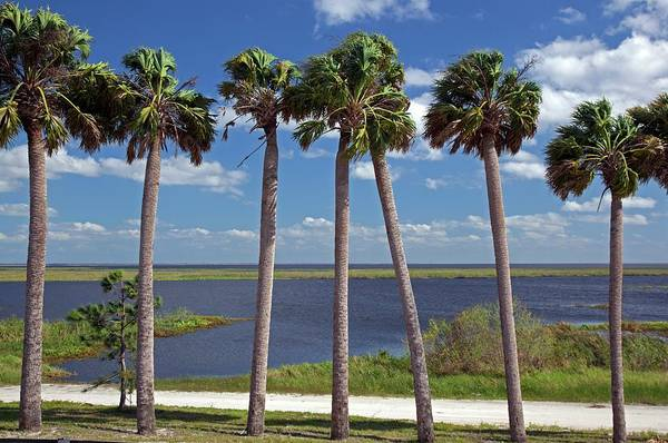 Lake Okeechobee Wall Art - Photograph - Palm Trees At Lake Okeechobee by Jim West