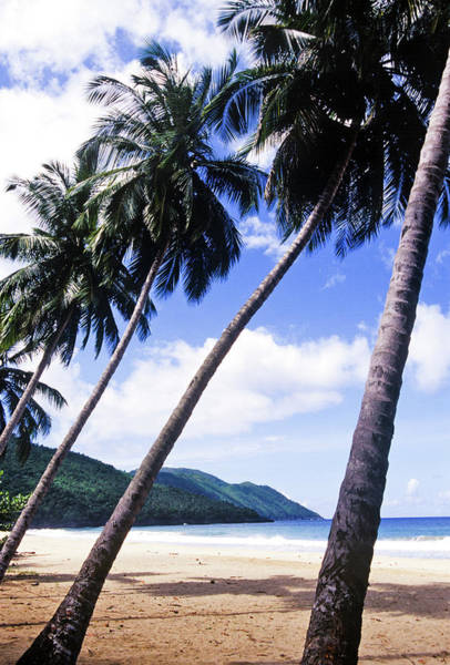 Dominican Republic Photograph - Palm Trees On Beach by Greg Johnston
