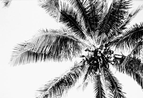 Wall Art - Photograph - Palm by William Wetmore