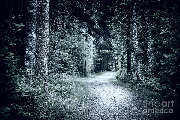 Gloomy Wall Art - Photograph - Path In Dark Forest by Elena Elisseeva