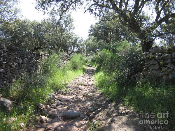 Path Near Almoharin Art Print