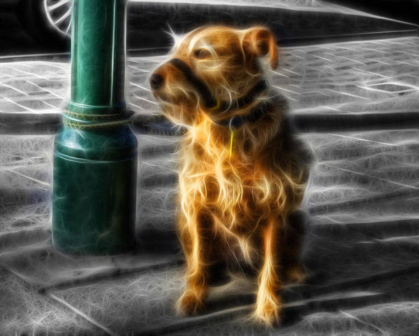 Photograph - Patient Dog  by Ian Mitchell
