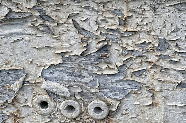 Photograph - Peeling Paint Pattern by Dan Friend