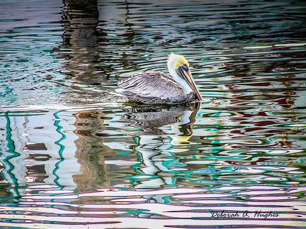 Photograph - Pelican by Deborah Hughes
