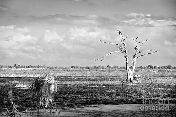 Airboat Photograph - Perched Up High by Cindy Tiefenbrunn