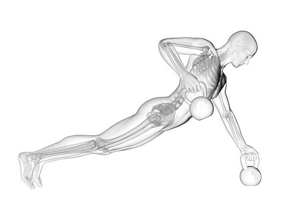 Anatomical Position Wall Art - Photograph - Person Lifting Kettle Bells by Sebastian Kaulitzki/science Photo Library