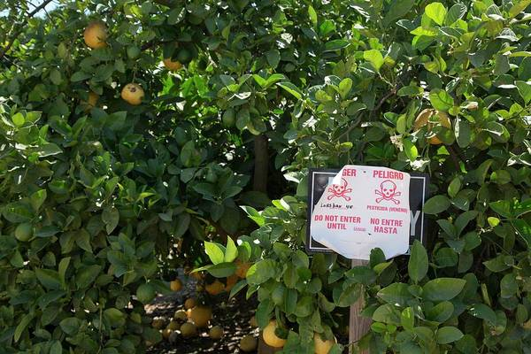 San Joaquin Valley Photograph - Pesticide Warning Sign by Jim West