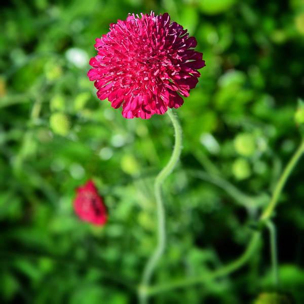 Photograph - Petite Fleur by Natasha Marco