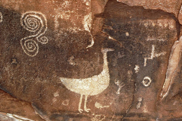 Petroglyph Photograph - Petroglyphs In Petrified Forest National Park by Keith Kent/science Photo Library