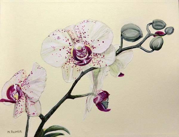 Painting - Phalaenopsis Black Panther Orchid by Mary Palmer