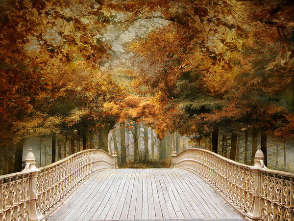 Photograph - Pine Bank Arch by Jessica Jenney