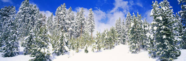 Peacefulness Photograph - Pine Trees On A Snow Covered Hill by Panoramic Images