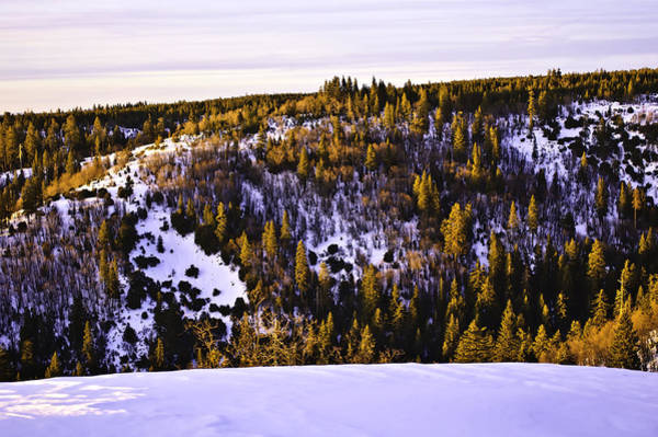 Photograph - Pines On The Ridge  by Sherri Meyer