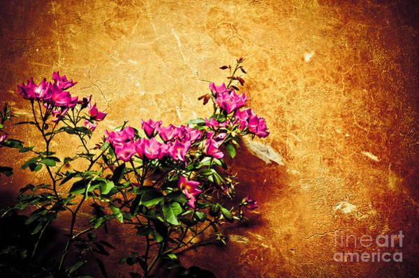 Photograph - Pink Flowers Against Weathered Wall by Silvia Ganora
