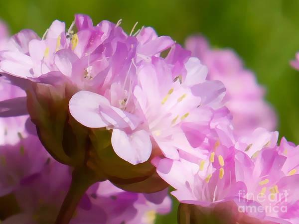 Photograph - Pink Power by Lutz Baar