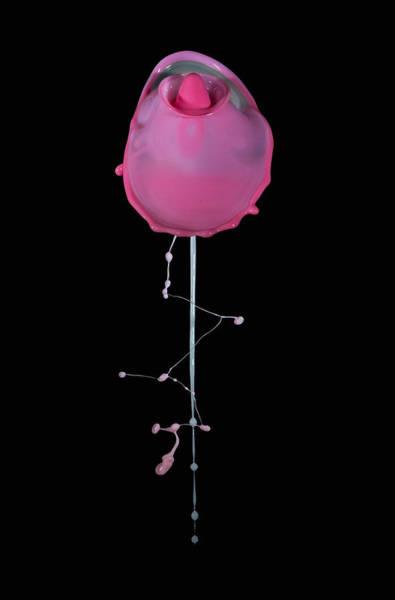 Wall Art - Photograph - Pink Rose by Jaroslaw Blaminsky