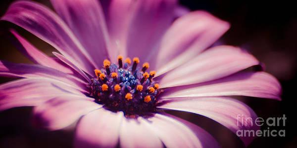Photograph - Pink Velvet by Hannes Cmarits