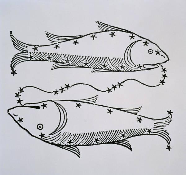 Backdrop Drawing - Pisces by Italian School